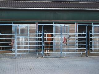 westernreitsport-rabia-bakri-pferdepension-paddockboxen
